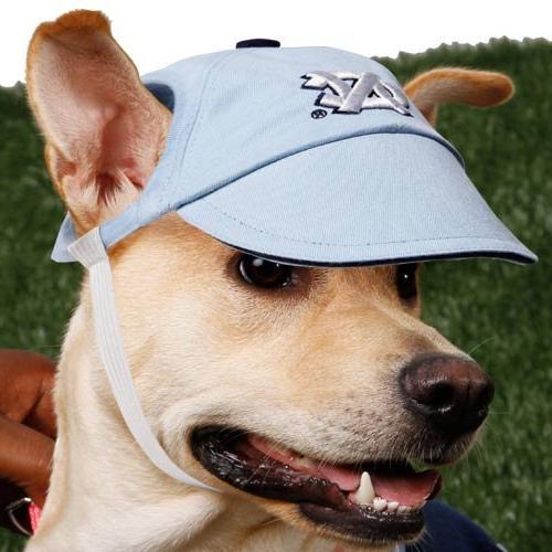college dog cap team university